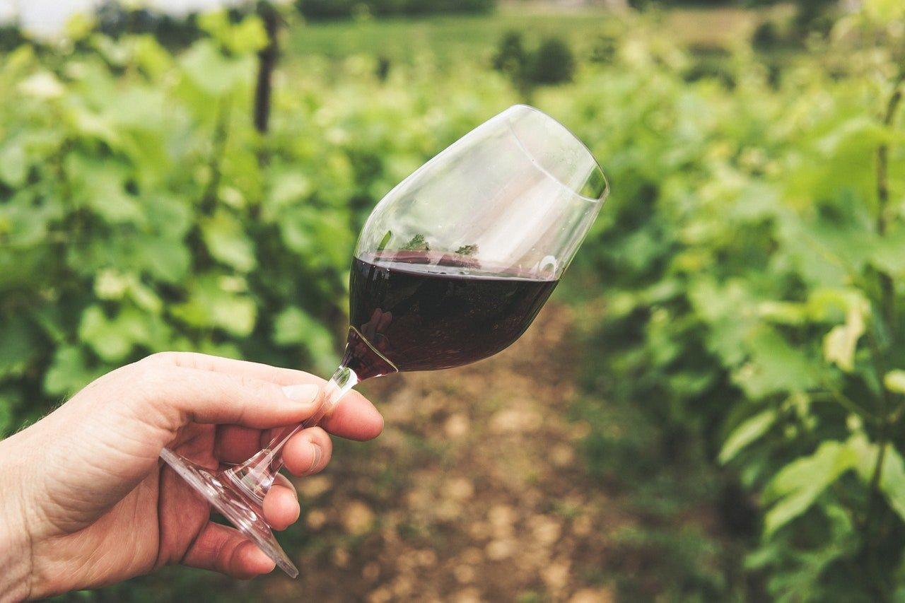 meilleurs vins de la France